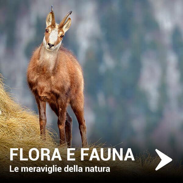 flora-e-fauna12